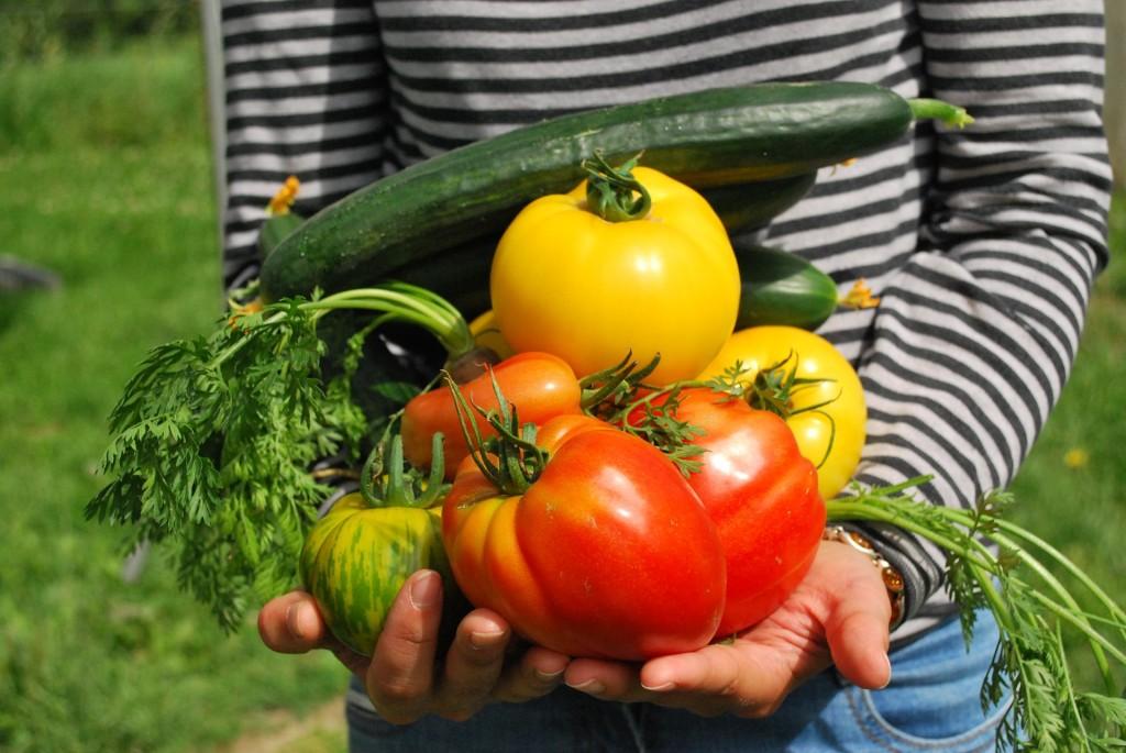 groentetuin beginnen
