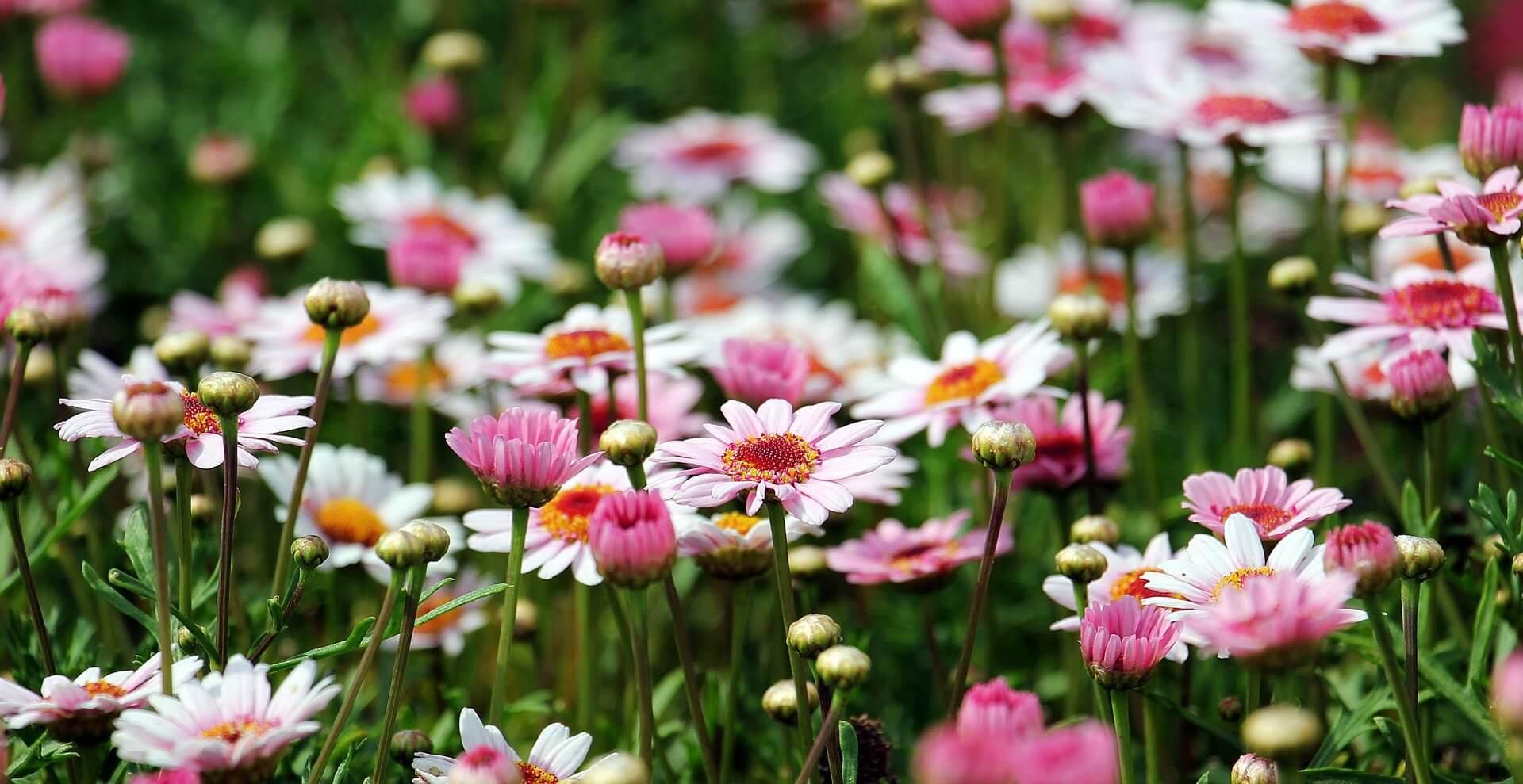 tuin opfleuren