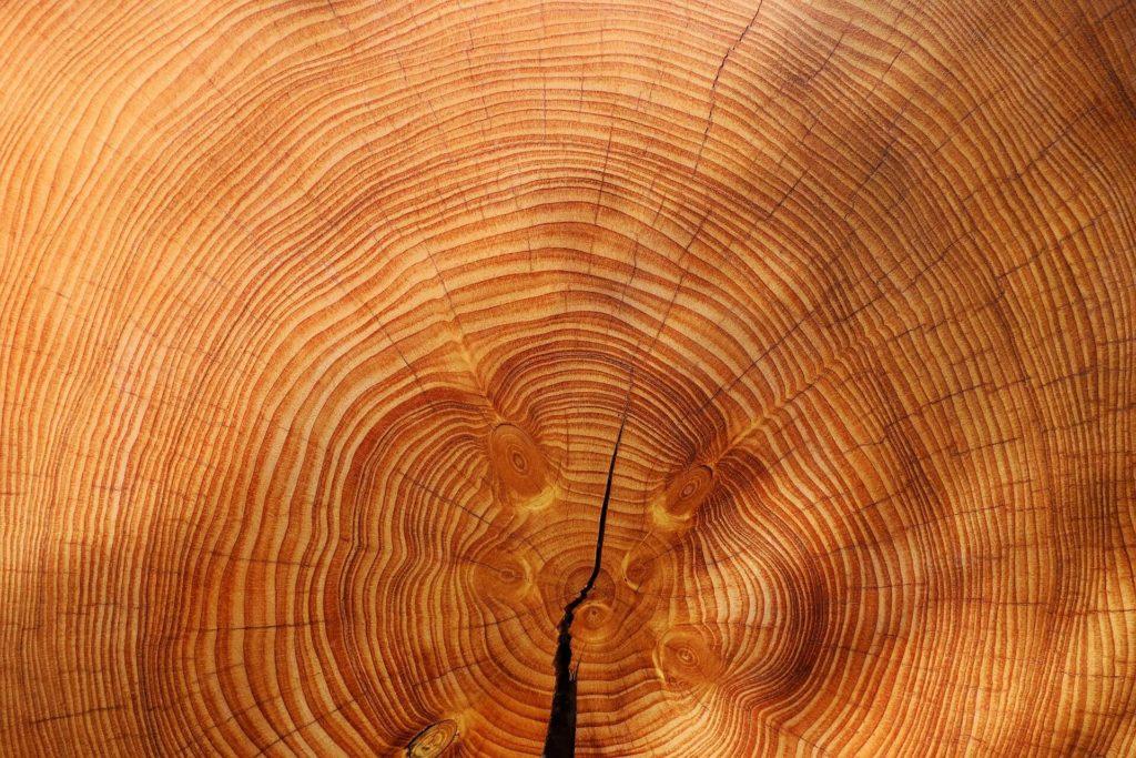 verwerken van hout