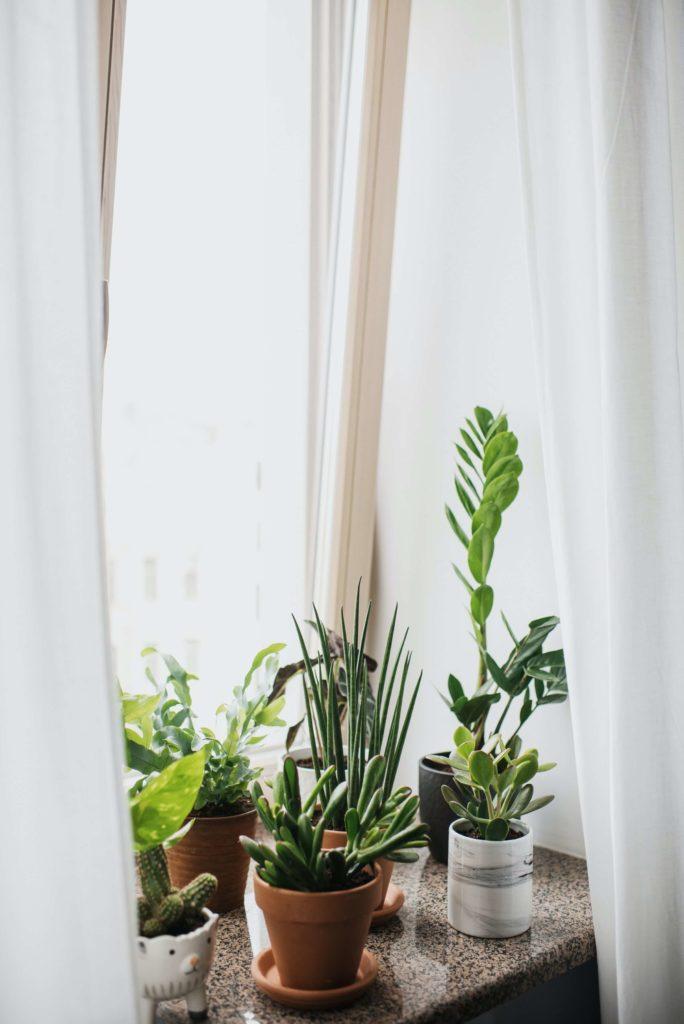 kamerplant onderhouden