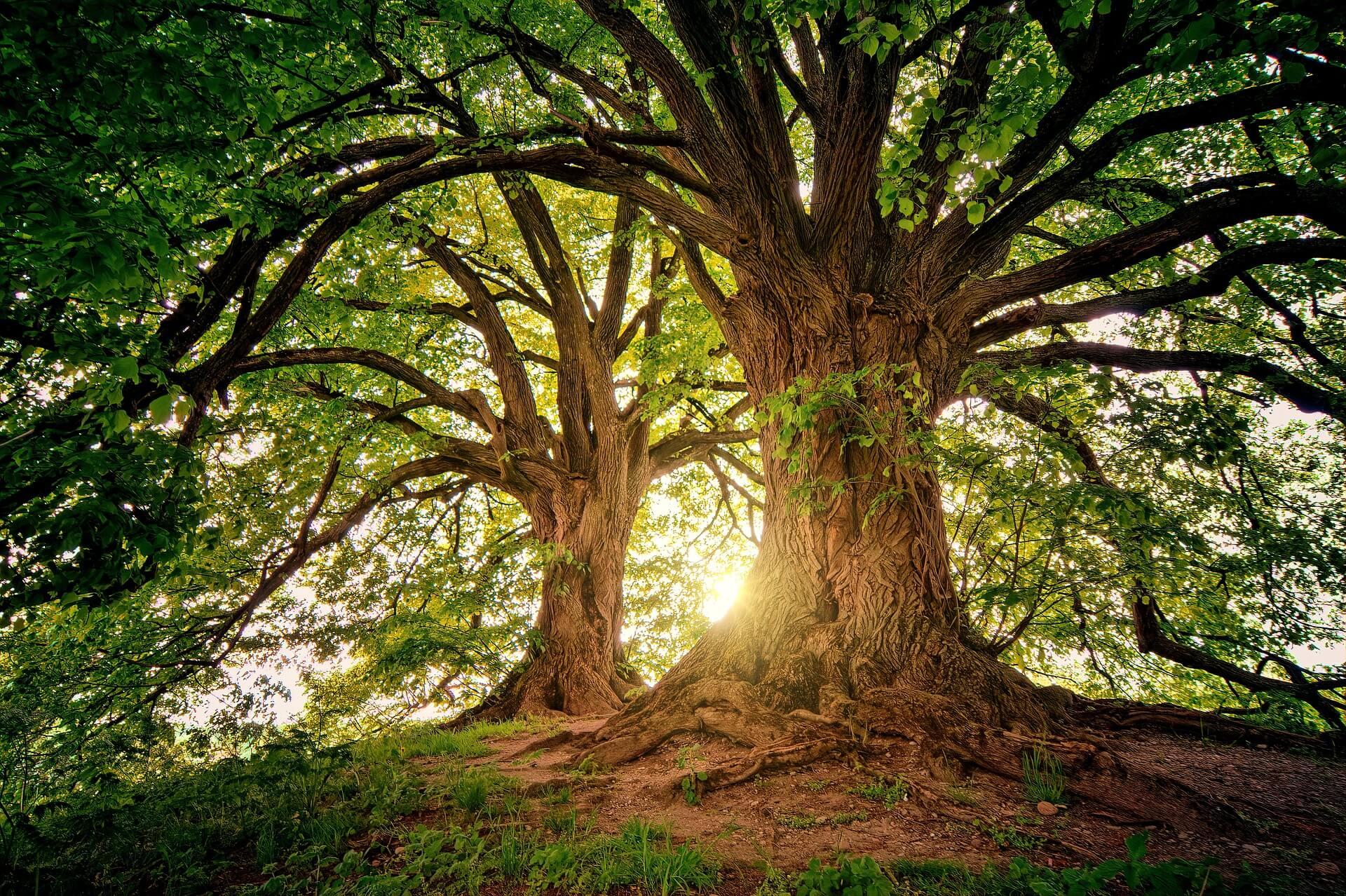 Geschikte boom voor in de tuin
